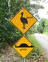 Cassowary sign near Cape Tribulation