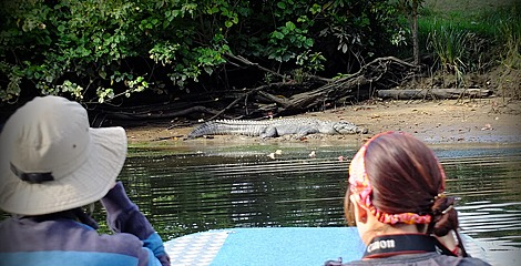 Crocodile-spotting on the Daintree River