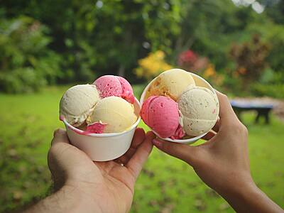 The Original Daintree Ice Cream Co