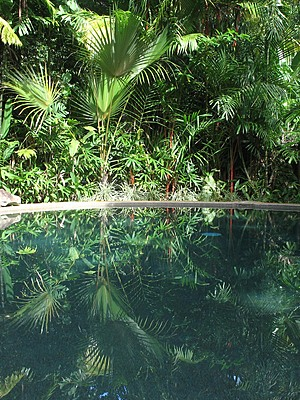 Daintree Rainforest Retreat Pool