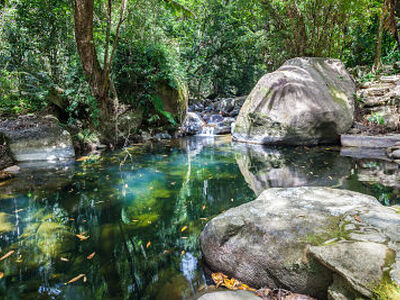 Daintree Secrets