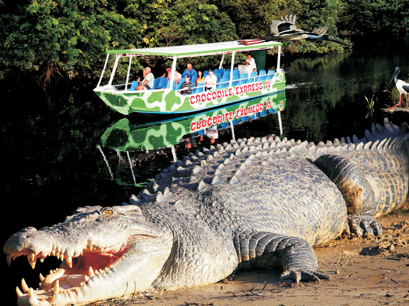 ddf027b1c4c63e Crocodile Express Daintree River Cruises - Destination Daintree
