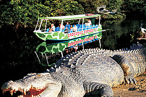 Crocodiles on the Daintree River