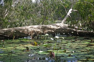 Keatings lagoon - Cooktown - D'Arcy of Daintree Tours