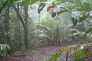 Rain in the rainforest - Daintree Deep Forest Lodge