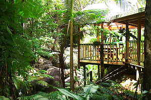 Verandah over the creek - Daintree Secrets