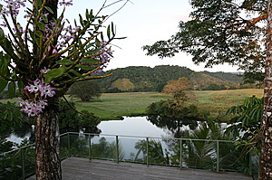 Deck over the Daintree River -Daintree Village Bed and Breakfast