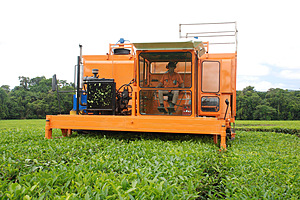 Harvester in action - Daintree Tea Company