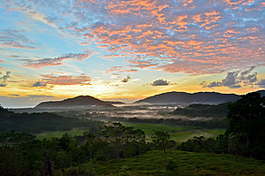 Sunrise over Daintree Tea plantation