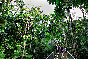 Spectacular aerial walkways - Daintree Discovery Centre
