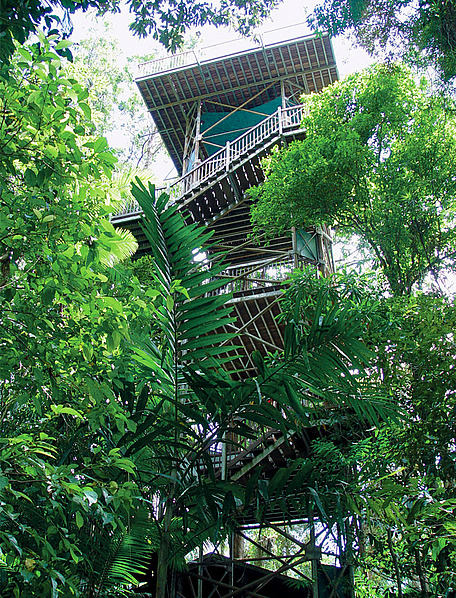 The famous 23m Canopy Tower - Daintree Discovery Centre ... & Daintree Discovery Centre - Destination Daintree