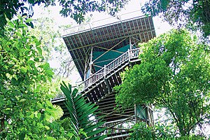 The famous 23m Canopy Tower - Daintree Discovery Centre