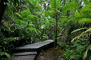Rainforest boardwalk - Lync Haven Rainforest Retreat