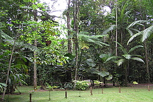 Camping area - Lync Haven Rainforest Retreat