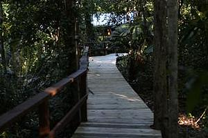 Rainforest boardwalk - Heritage Lodge & Spa