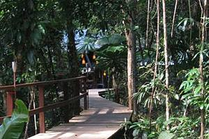 Rainforest boardwalk - Heritage Lodge & Spa